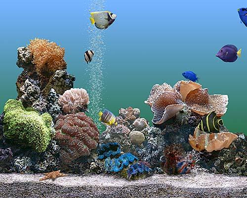 SereneScreen Marine Aquarium 3.2.5991 | ������� SereneScreen ...